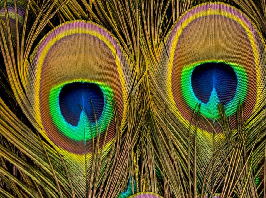 YO Photo Contest: Eyes In Nature